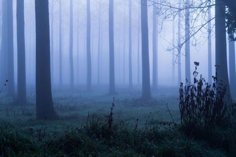Misty,