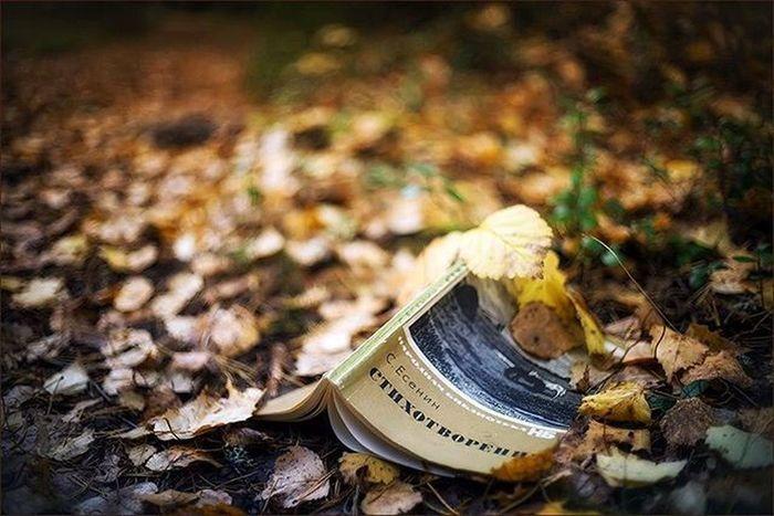 осень листья есенин стихи книга чтение забвение желтый тишина настроение Autumn Leaves Verse Lyrics Oblivion Reading Silence Mood