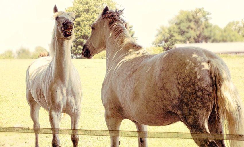 3/4 HorsePlay