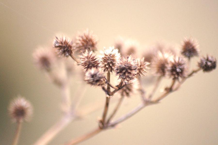 Select Eyem Flower Head Flower Desert Thistle Uncultivated Springtime Arid Climate Close-up Sky Plant