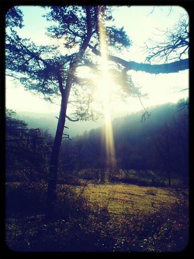 Nature Trees Enjoying The Sun Enjoying The View