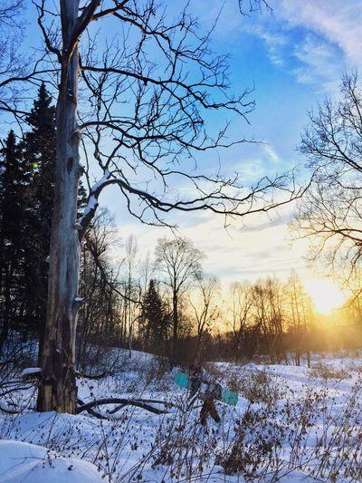 Snow Winter Sport Tree Nature Traveling Sun Sunset Nature Landscape Photo Russia