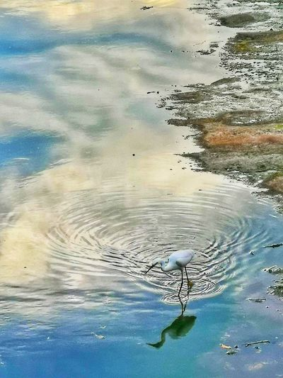 Reflection Water UnderSea Sea Sea Life Beach Bird Backgrounds Wave Swimming Blue Refraction Rippled Calm Water Surface
