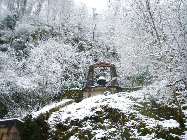 Tree Winter Nature Bosque Forest Campanario Valley Mountain Bell Campana Invierno White Letitsnow Nieve Covadonga Asturias Tree Outdoors Nature Cold Temperature Winter Snow Travel Nevado Frio ⛄❄
