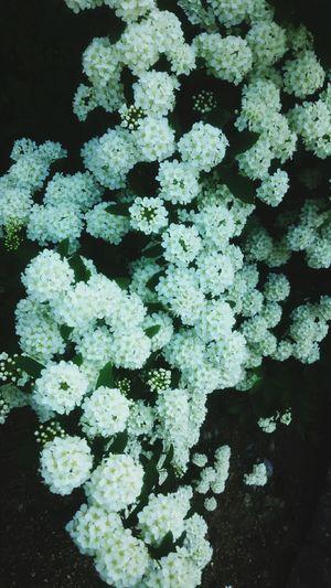 Taking Photos Fiowers Amagasaki Flowers Streetphotography