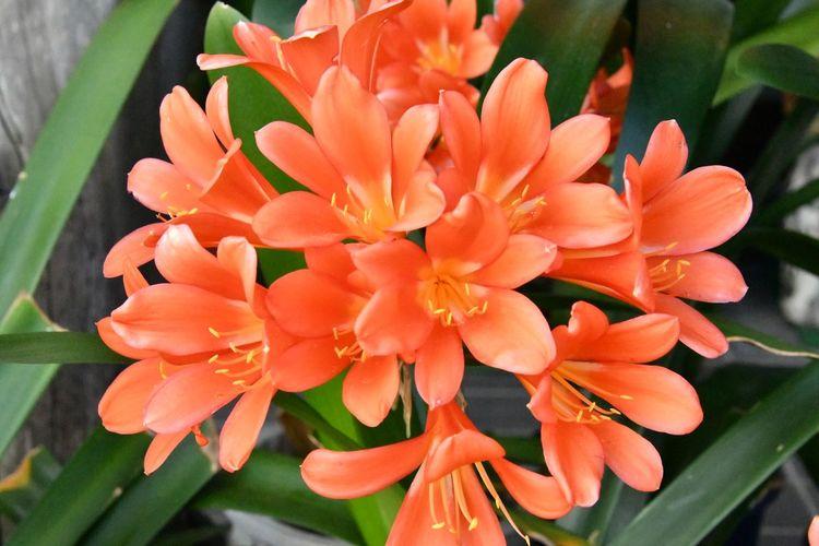 Flowering Plant Flower Plant Beauty In Nature Petal Vulnerability  Freshness