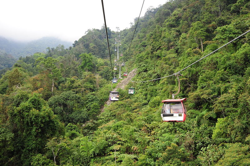 Genting Highland Malaysia Beauty In Nature Cable Cable Car Day Foliage Forest Green Color Growth Lush Foliage Mode Of Transportation Mountain Nature No People Non-urban Scene Outdoors Overhead Cable Car Plant Scenics - Nature Skyway Transportation Tree