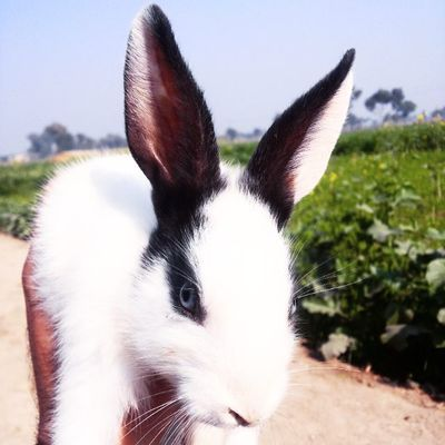 Lovely Rabbit Beautyoverload Cuteness Cutenessoverload Nature Magicofnature