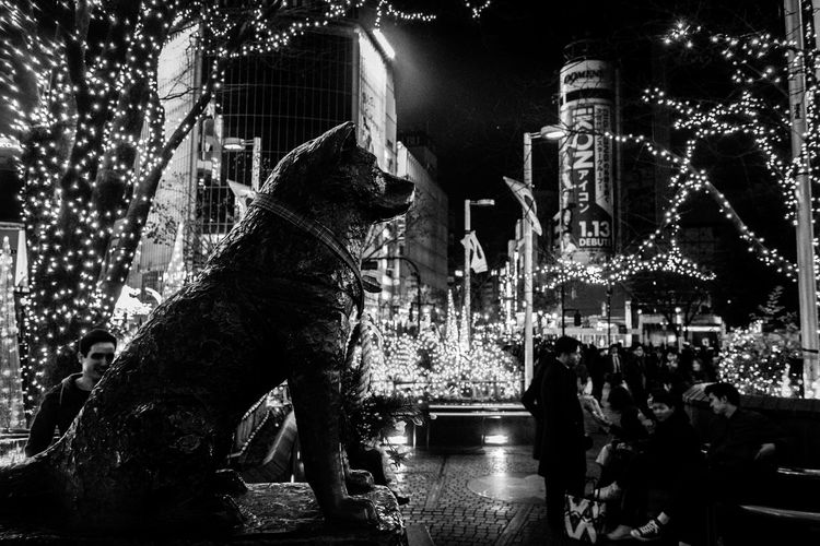 Statue Of Dog In Illuminated City At Night During Christmas