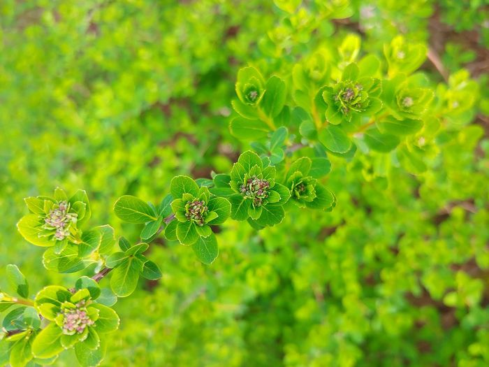 High angle view of flowering plant