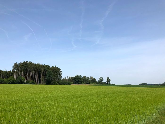 Plant Sky Field Tree Land Landscape Tranquility Environment Tranquil Scene Growth Beauty In Nature Green Color Scenics - Nature Cloud - Sky No People Rural Scene Agriculture