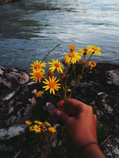 Day Nature No People Flowers World