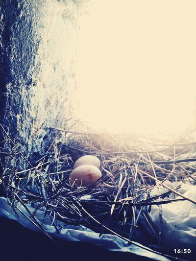 Eggs Birds Animals Taking Photos Bird Eggs Selfie ✌ Cheese! Hello World
