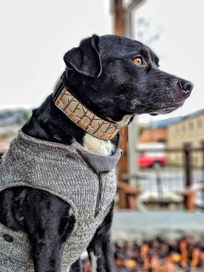 Pets Dog Winter