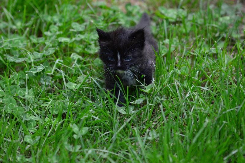 Portrait of a black cat on field