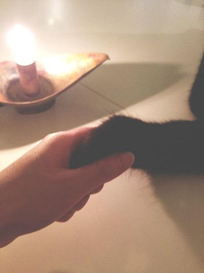 Cat Black Cat かまってちゃん 遊ぼうよ …(/ _ ; )