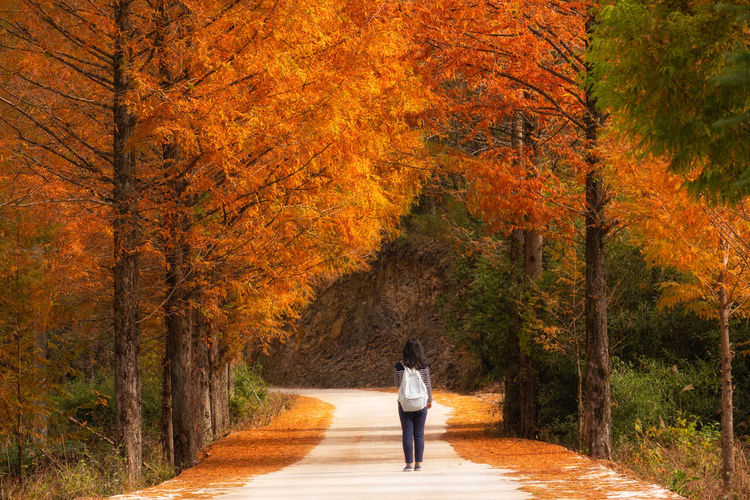 Autumn road Tree Autumn Plant Rear View Change One Person Walking Orange Color Nature Direction Autumn Collection