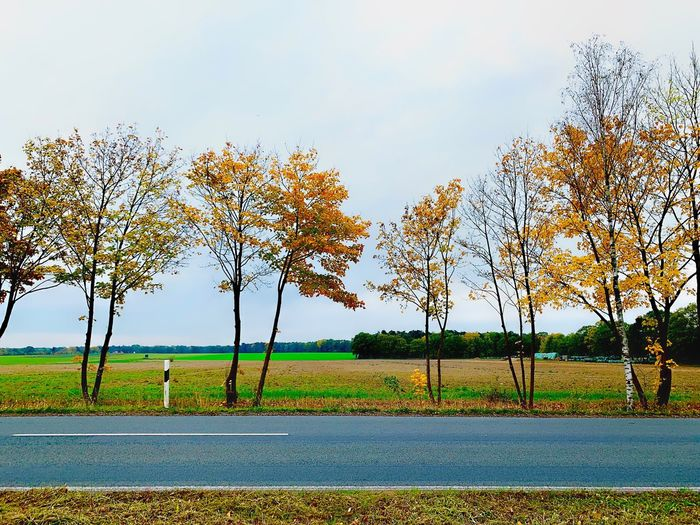 Herbstlandschaft Straße Streetphotography November Wedemark Herbst Sky Plant Field Growth Landscape Beauty In Nature Land Environment Rural Scene Agriculture Outdoors No People Nature