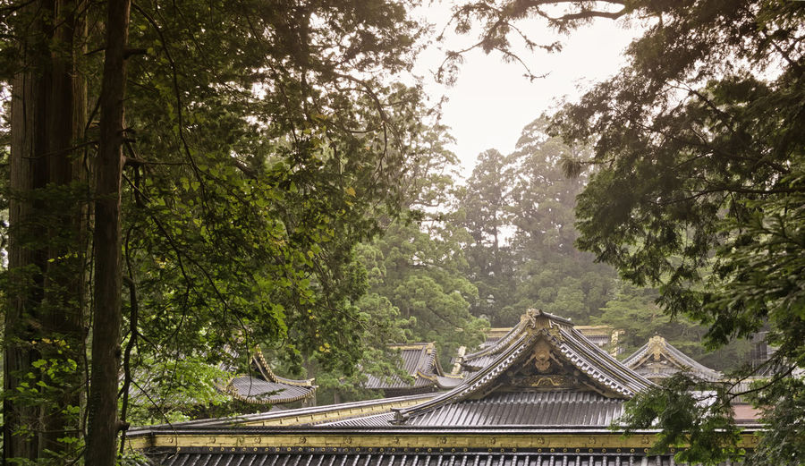 View of traditional wooden rooftops of the antique Japanease temples with golden details in a rainy day of summer. Oriental old style architecture surrounded by the forest. Antique Asian  Gold Golden Japan Japanese  Roof Rooftop Shrine Typical Architecture Buddhism Building Culture Heritage Historical Kyoto Old Oriental Religion Structure Symbol Temple Traditional Tree