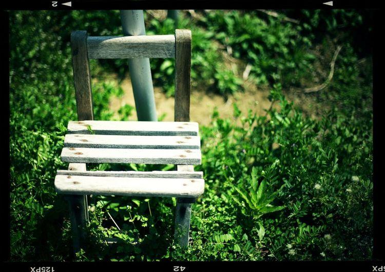 Empty bench on grassy field