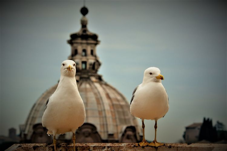 Close-up of seagulls perching in city