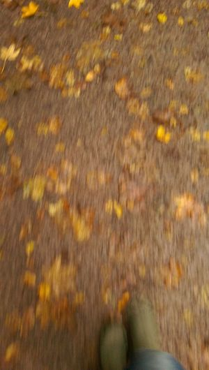 Lifestyles One Person Autumn Close-up