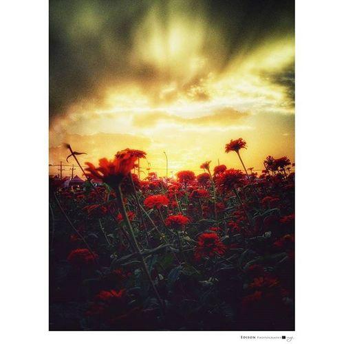 【 夢裡花田 】 Flower 365Snap Light 手機攝影 LGG4