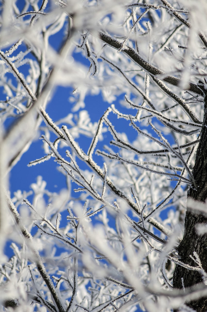 winter, plant, cold temperature, snow, no people, nature, close-up, day, tree, selective focus, beauty in nature, tranquility, frozen, growth, branch, outdoors, white color, ice, land