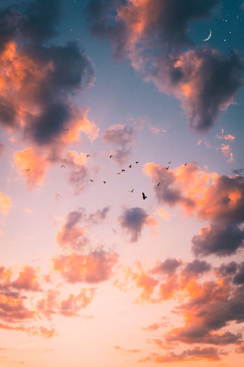 Celestial sunset Dusk Sky Moon Beauty In Nature Bird Birds Birds In Flight Celestial Cloud - Sky Day Dusk Dusk Colours Dusk In The City Flying Majestic Nature No People Outdoors Scenics Silhouette Sky Spread Wings Stars Sunset Togetherness first eyeem photo