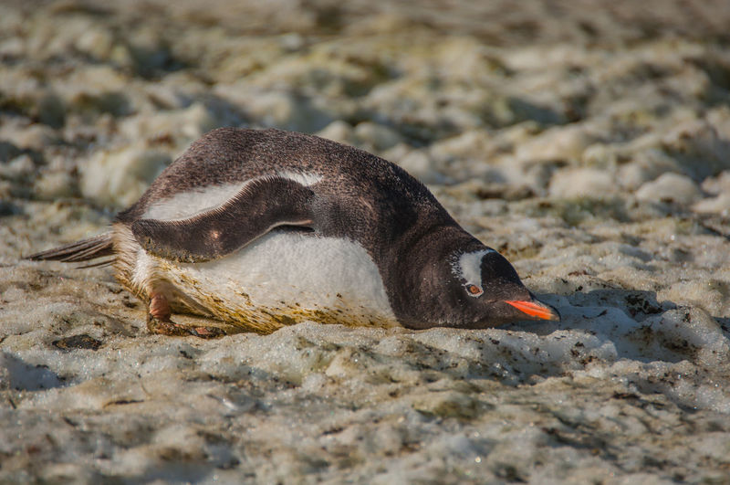 Close-up of bird on sand at beach