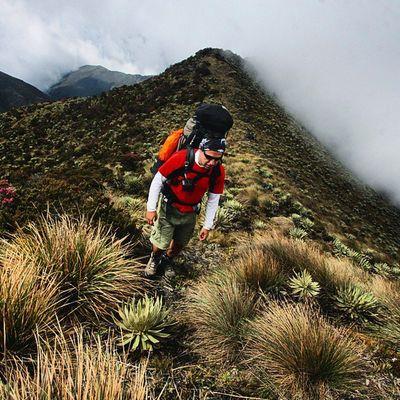 Entre neblina y frailejones un montañista camina los senderos del parque nacional Paramos del Batallon y de La Negra en Tachira  en Venezuela Venezuelatravel Venezuelaes Gotravelfree Gf_venezuela Gf_colombia IG_GRANCARACAS IgersVenezuela Insta_ve Instapro_ve IG_Venezuela InstaLoveVenezuela Instafoto_ve Instaland_ve Destinomaschevere Tequierovenezuela Thisisvenezuela Icu_venezuela Ig_lara Igworldclub Ig_tachira IG_Panama Instaland_ve Everydaylatinamerica
