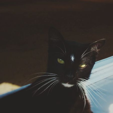 Out Of The Box Domestic Cat Animal Themes Portrait One Animal Indoors  Looking At Camera Close-up Day Motion Beauty In Nature Beauty