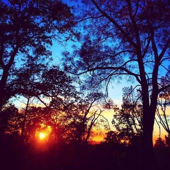 California Tree Sunset Oroville
