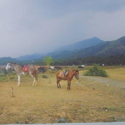 Flashback Kozikode Kerel Waynad Horses