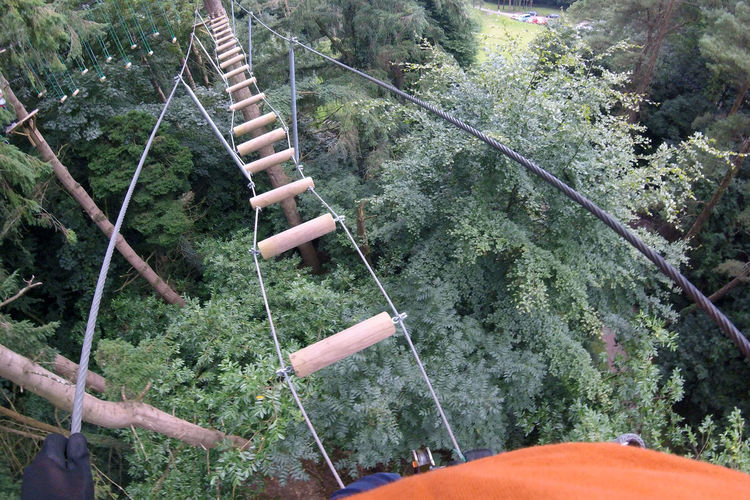 A Long Way Down In The Forest No Fear Rope Bridge Treetop Adventure