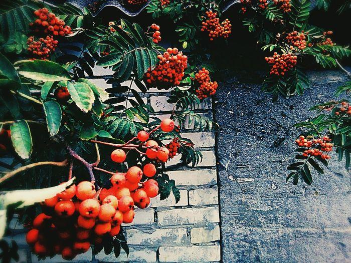 Plant Nature