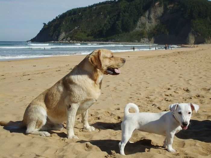 View of dogs on beach against sky