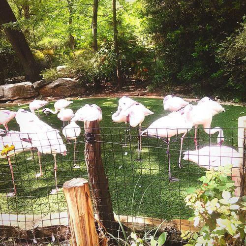Got to love them pink birds Enjoying Life Taking Photos Hello World Love Birds ❤️❤️❤️❤️