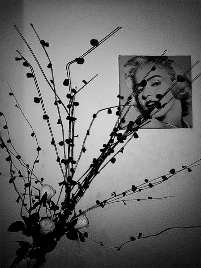 IlusionDiva♥ MARILYN MONROE ♡♥♡♥ _M3t4m0rf0siS_ Remembering Old Times No People Close-up Silhouette Outdoors Nature Bird Day Sky Animal Themes Best Of EyeEm HuaweiP9 Vertical Monochrome Photography Black And White