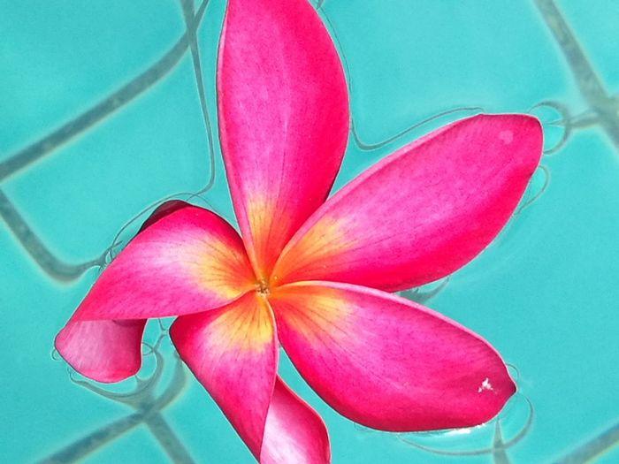 Pink Color Flower Close-up Pool Sky Blue