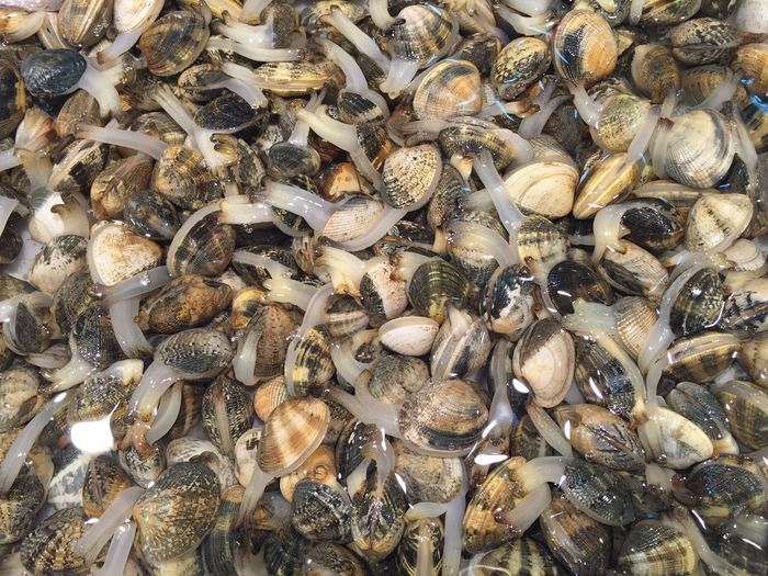 Full frame shot of clams in water