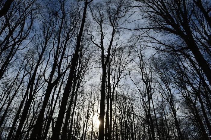 Wilderness shillouette. River Bends Hike Trees Shillouettes And Sunshine Shillouette Nature
