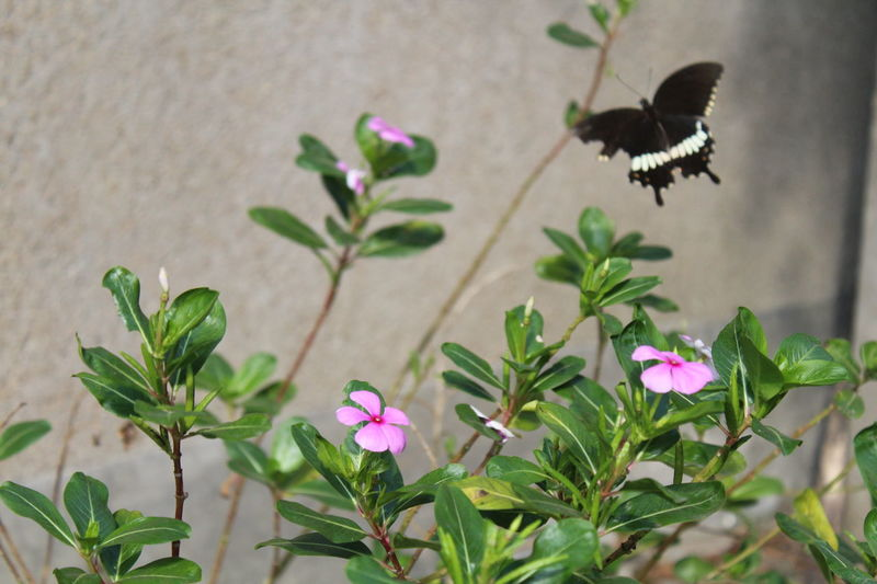 Butterfly - Insect Butterfly ❤ Buterfly On The Garden. Buterfly 🌺🌺🌺 Outdoor Photography Flowers,Plants & Garden Flowers