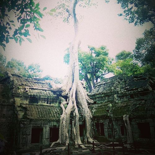 The Tree didn't grow from the ground and through the rooftop. It grew on the rooftop and the roots extended to the ground. The temple has a low ceiling and is on low lying ground. Plus the fact there's often flooding during rainy season, and all these could have contributed to this phenomenon. Travels Globetrotting Cambodia Siemreap Tombraider TaProhm Temples
