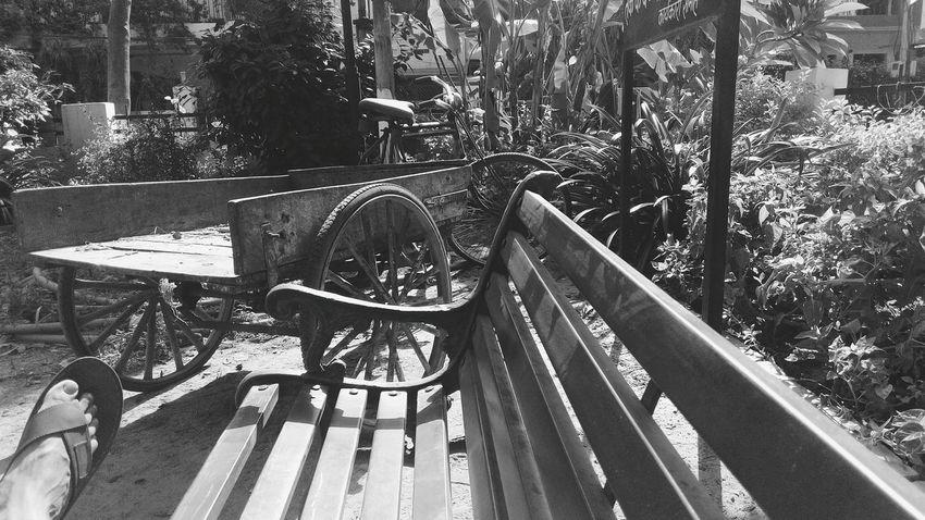 Tree Bench Park Bench Park Daylight Outdoors SSClickPics SSClicks Monochrome Photography Mobile Photography Monocrome Photography Black & White Greyscale Monochrome Tricycle