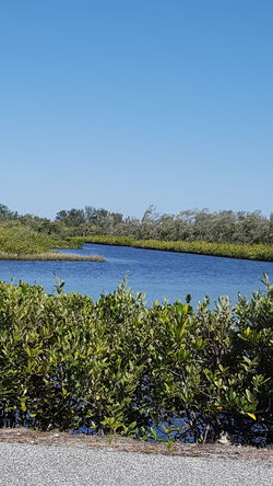 Break time Break Time Nature Photography Nature Walk Pond Florida Life Robinson Preserve Cortez  Cool Blue Water Breezy Day