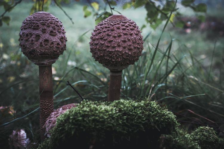 parasols Nature
