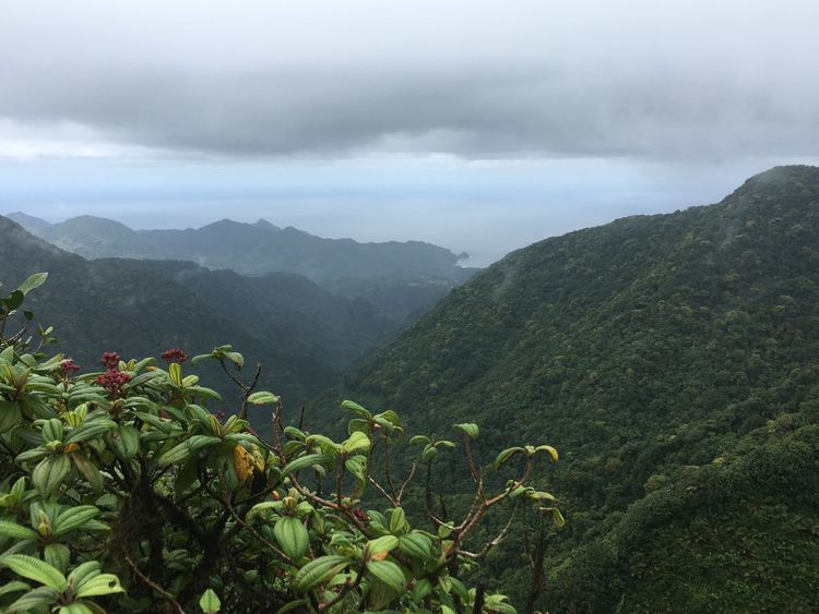 Dominica Beauty In Nature Cloud - Sky Day Fog Freshness Green Color Growth Landscape Mountain Mountain Range Nature No People Outdoors Plant Scenics Sky Tea Crop Tranquil Scene Tranquility Tree
