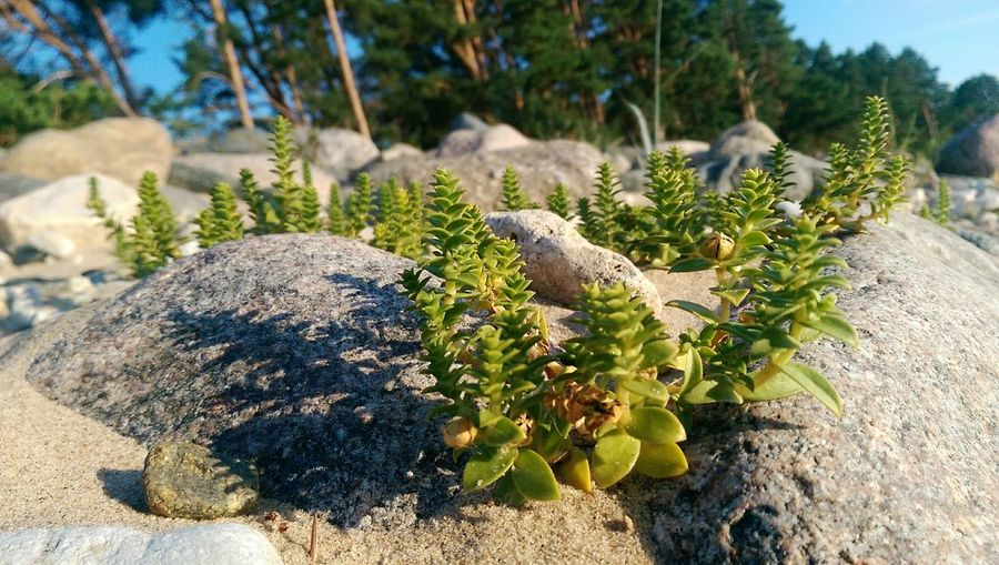 beach plants, sand, phone photography