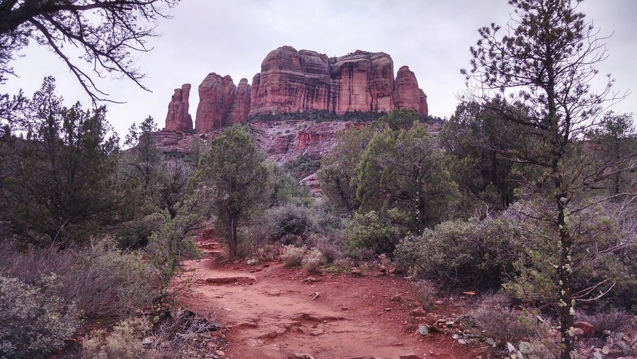 Cathedral Rock Beauty In Nature Sedona Sky Beauty In Nature Nature TreeArizona Winter Storm Cloud Scenics Outdoors Landscape Cloud - Sky Growth Day Nature Perspectives On Nature
